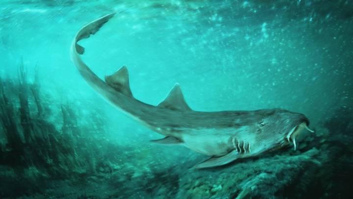 galaga shark