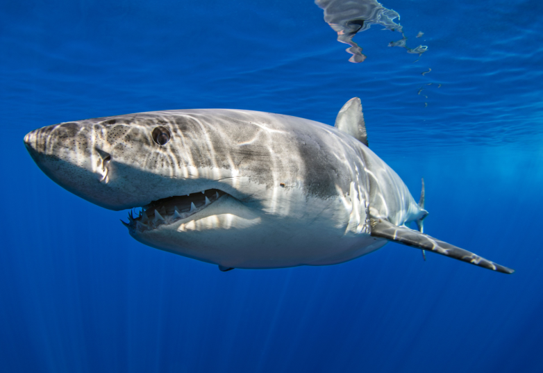 shark deterrents