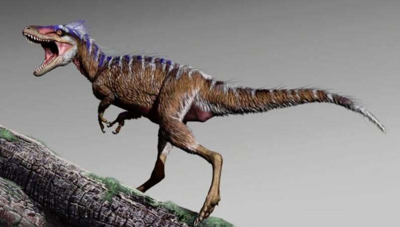 new tyrannosaur