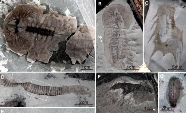 china fossils