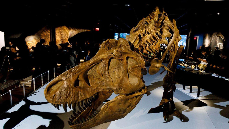 largest t rex
