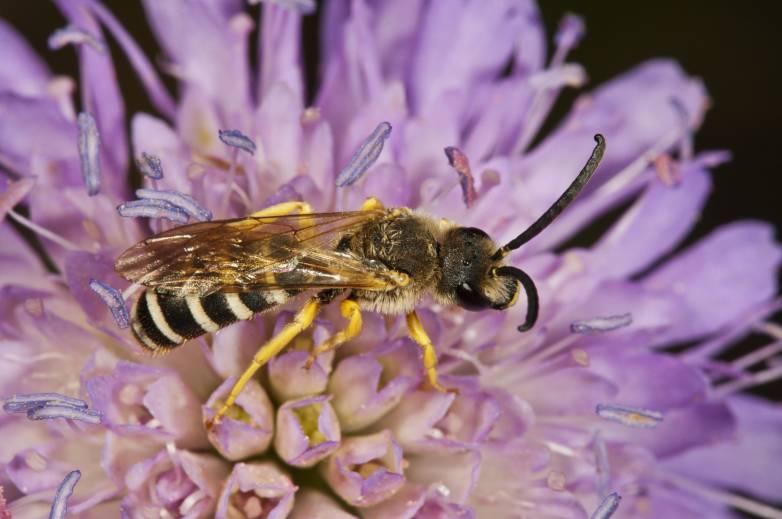 bees in eye