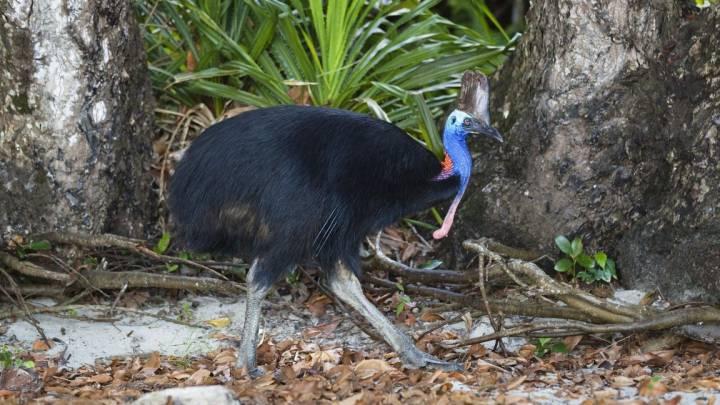 florida man bird attack