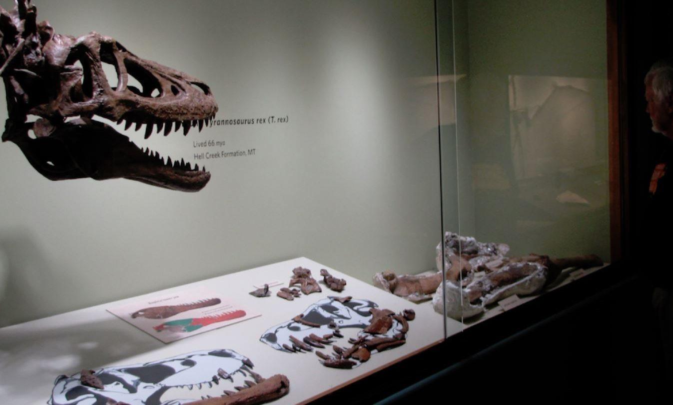 t rex auction