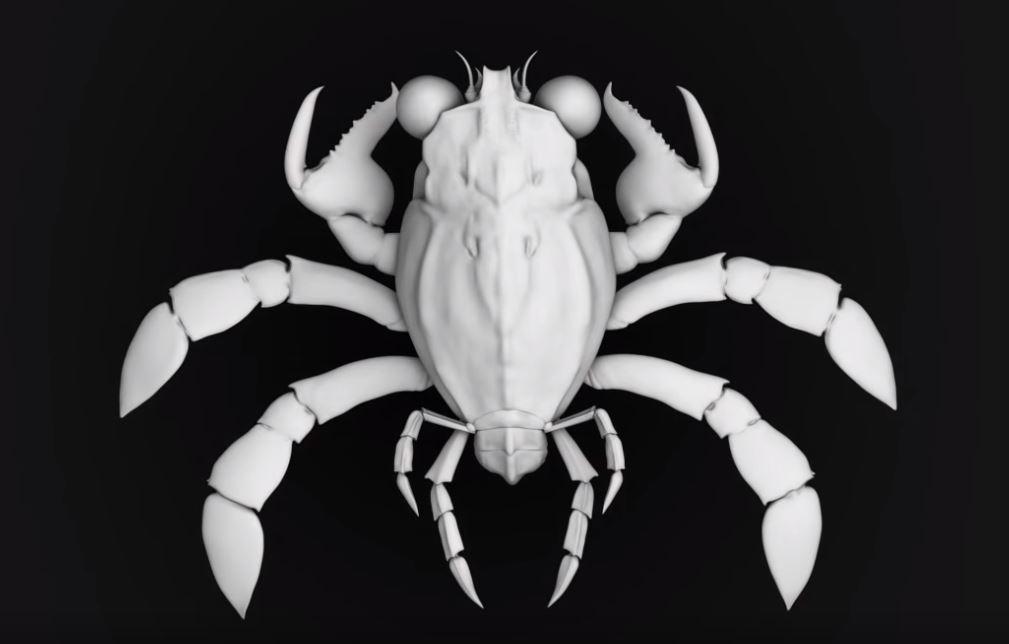 crab fossil