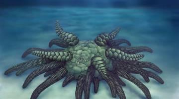 cthulhu fossil