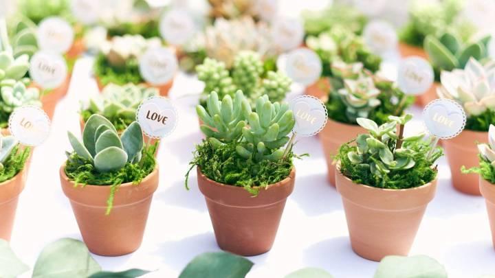 Amazon Succulent Plant Sale