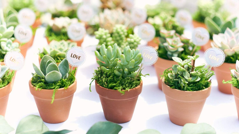 Succulents Sale On Amazon
