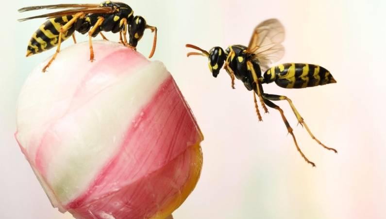 wasp logic