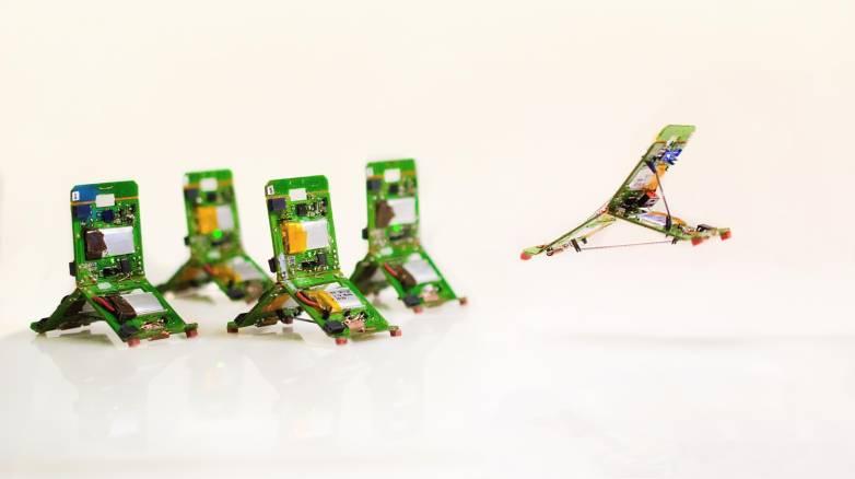 ant robots