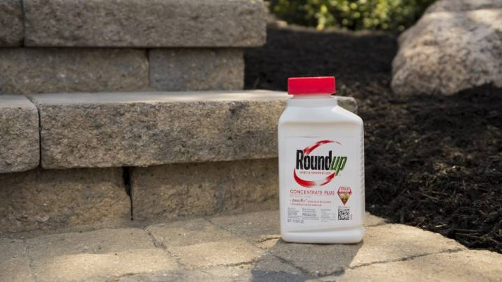 Best Weed Killer For Your Yard