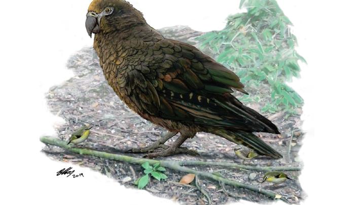 giant parrot