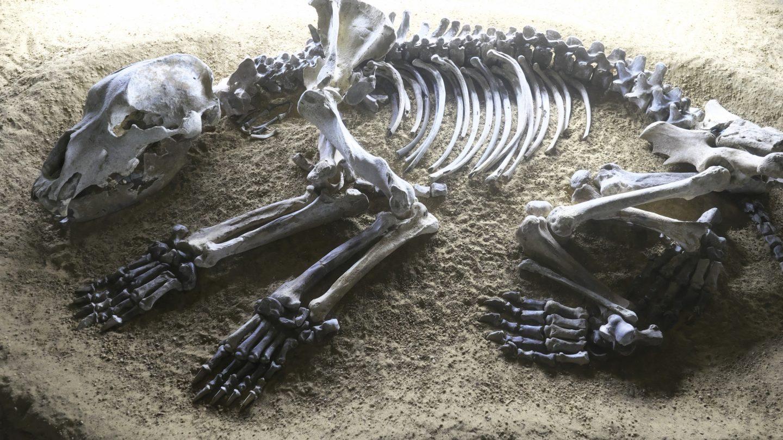 cave bear extinction