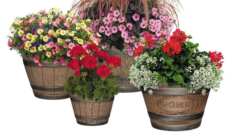 Best Planter to Spruce Up Your Home
