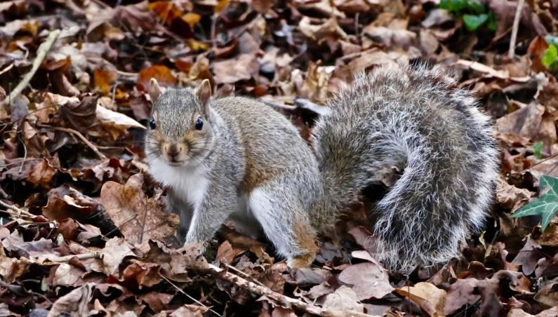 squirrel spying