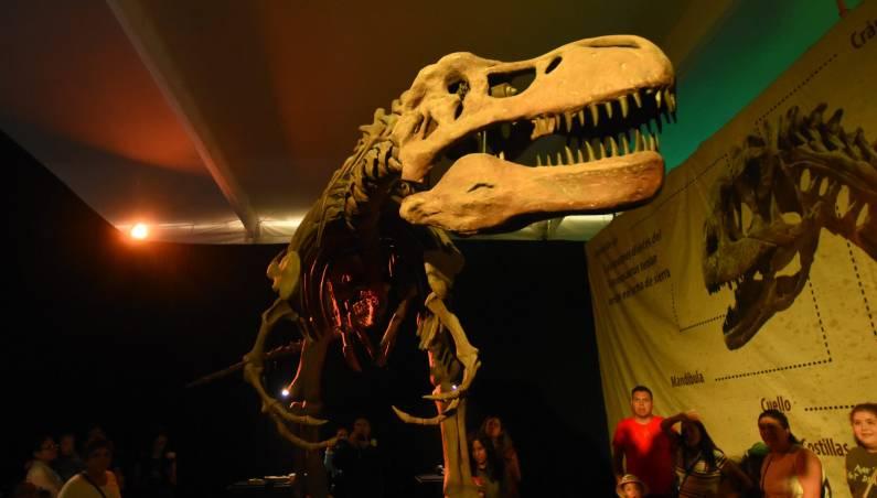 t rex skull holes