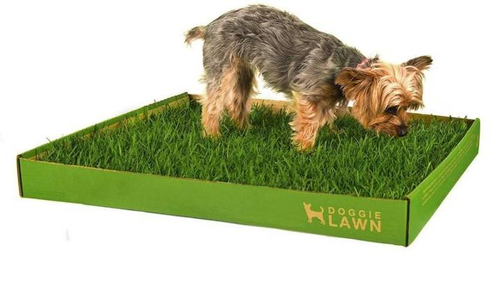 Best Grass Pad for Dog Training