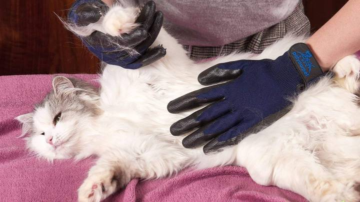 Best Pet Grooming Glove