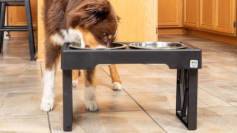 Best Adjustable Food Bowl