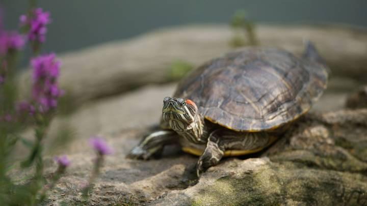 turtle salmonella