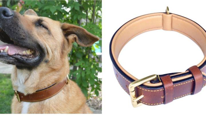 Best Collar for Dogs