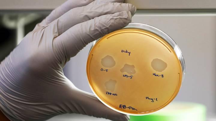drug resistant bacteria