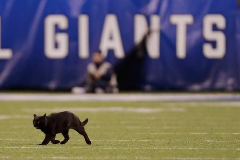 cat on football field