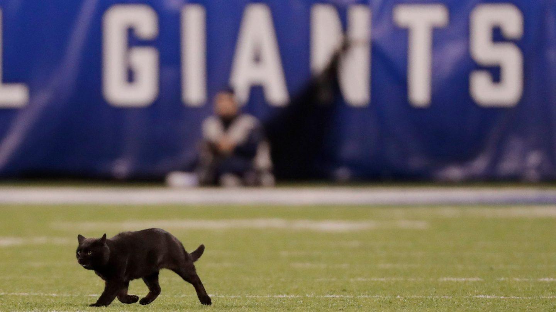 black cat on football field