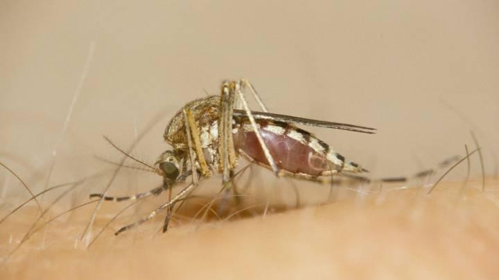 mosquito coronavirus