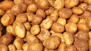 potato shortage
