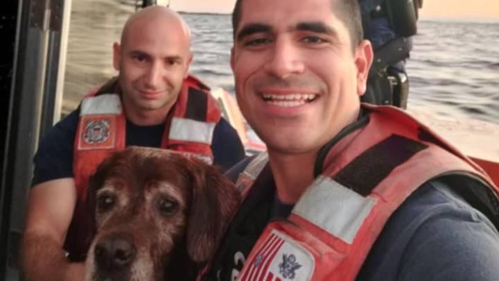dog coast guard