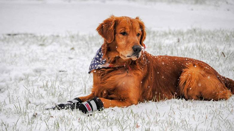 Best Waterproof Shoes for Dogs This Winter