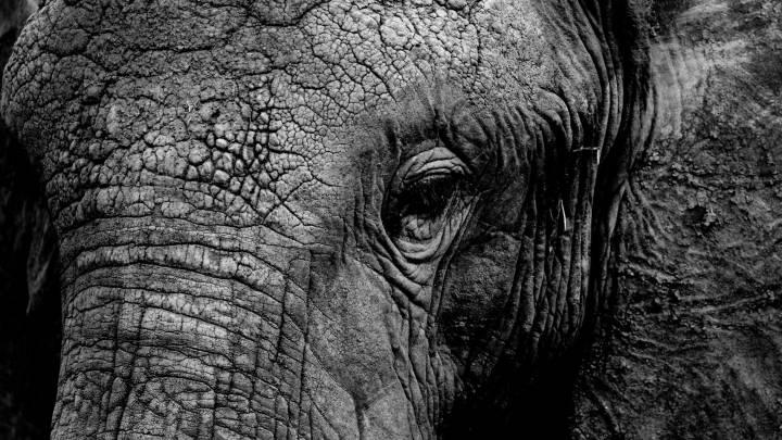 russia circus elephants