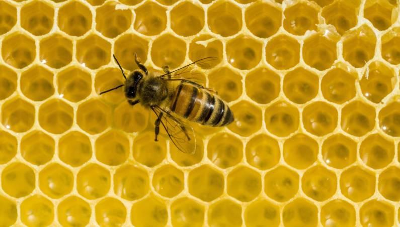 beehive theft