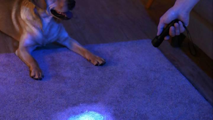 LED Flashlight Amazon