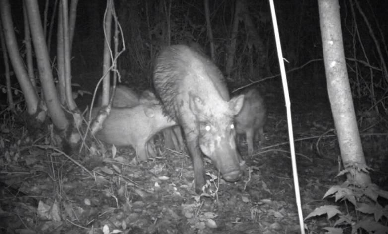 fukushima wildlife