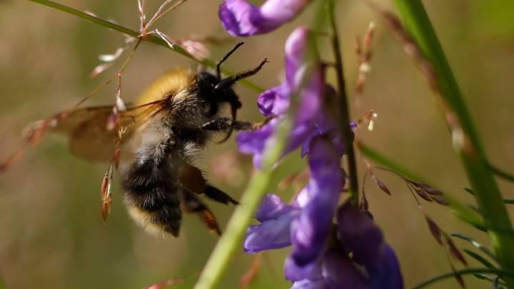 bumblebee tricks