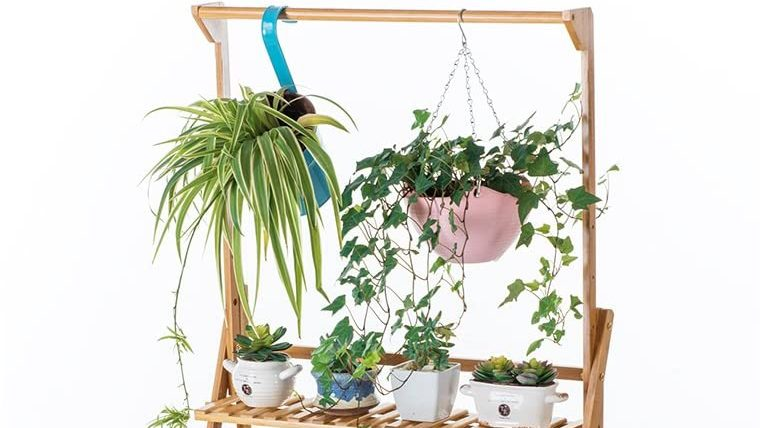 Best for Hanging Plants