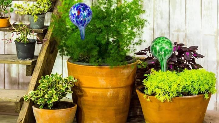 Best Plant Watering Bulbs