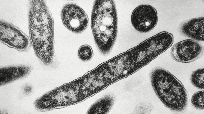 Coronavirus lockdowns