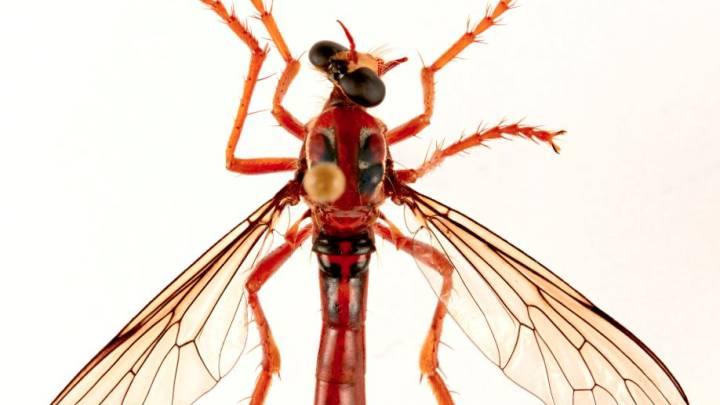 deadpool fly