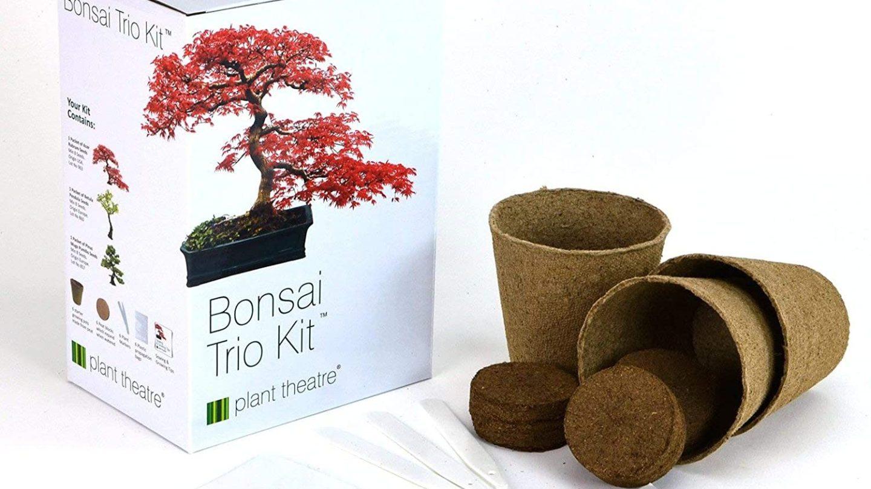Best Bonsai Tree Kit