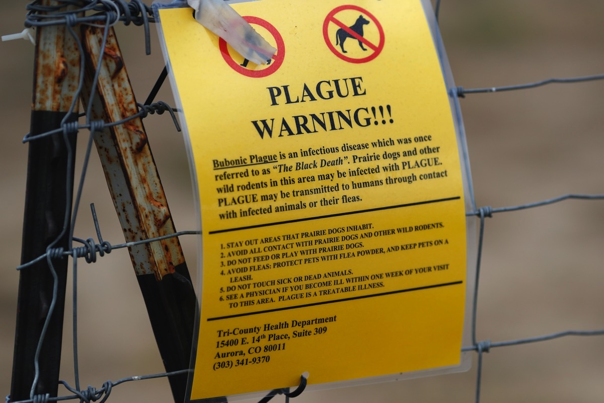 Bubonic Plague Cases