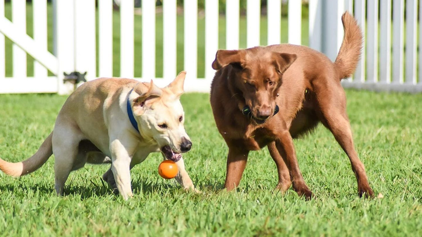 Best Dog Toy for Aggressive Chewers