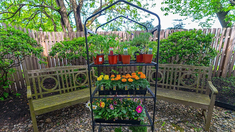 Best Narrow Greenhouse