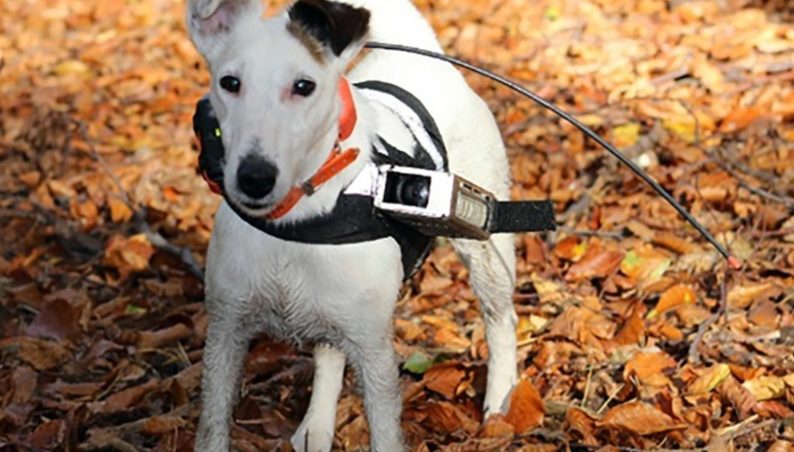 dog compass