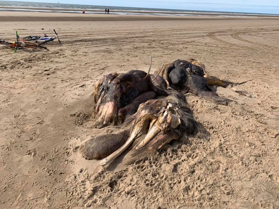 A giant dead thing just washed up on a UK beach and nobody knows what it is