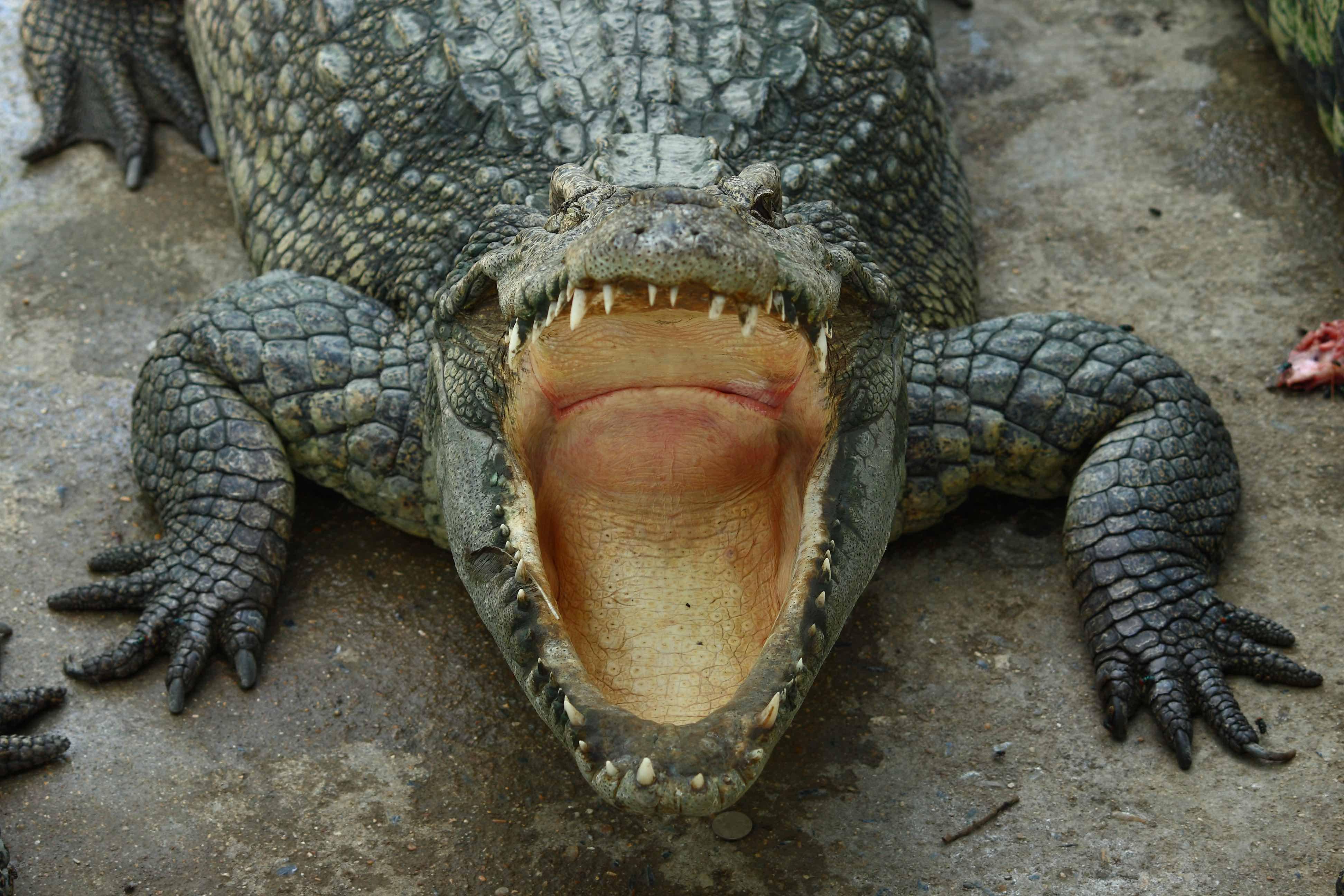 Bus-sized 'terror crocodiles' once roamed the Earth – BGR - BGR