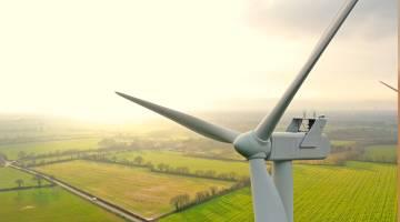 wind turbine birds