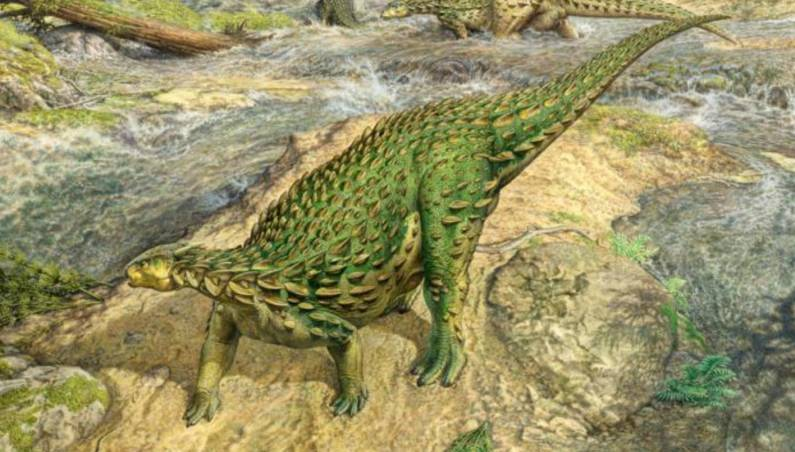complete dinosaur skeleton